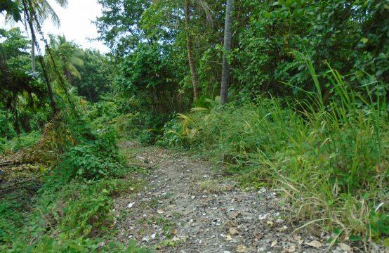 Large portion of land at North-End, Marigot