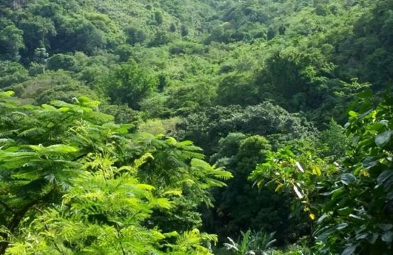 Dominica Real Estate: 1 Acre Property For Sale