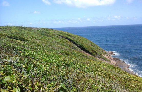 1.5 Acre Peninsula For Sale In Calibishie