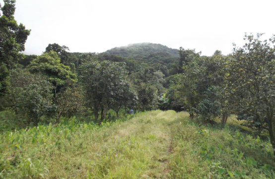 Dominica Real Estate: Land For Sale In Syndicate