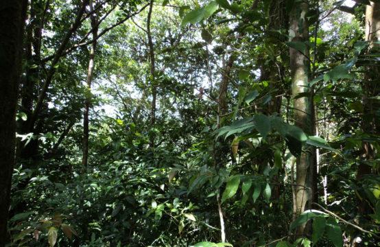 2.8 acres of untouched land at Despor