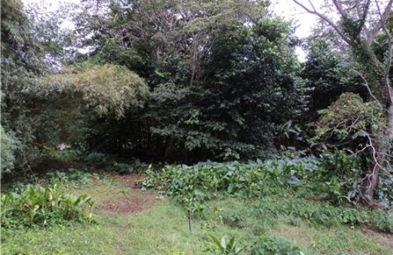 Dominica Real Estate: Acres of land in Hatton Garden