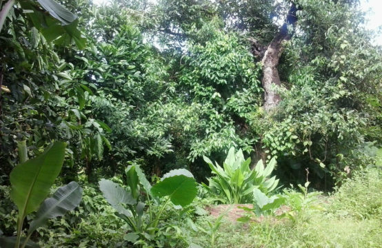 Residential Land For Sale In La Plaine