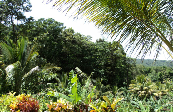 Dominica Real Estate: Land For Sale In Despor