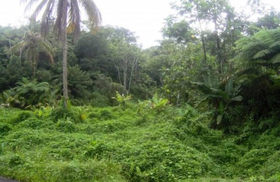 Rain Forest Land For Sale In Dominica