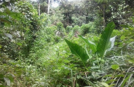 Dominica Real Estate: Lot For Sale In La Plaine