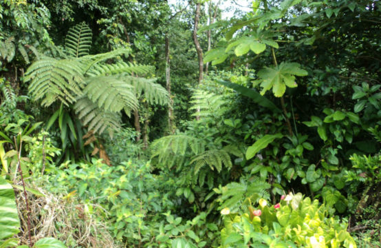 Dominica Real Estate: Land For Sale In Pond Casse