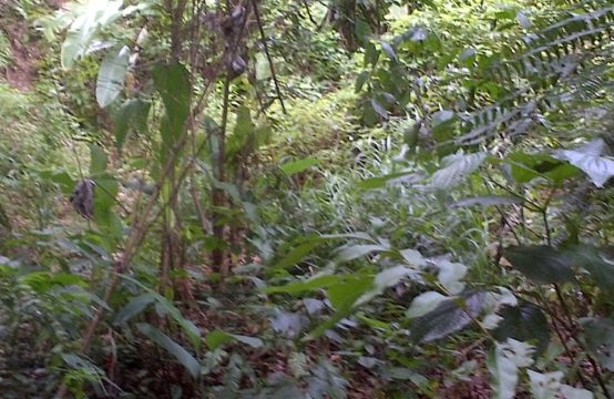 Dominica Real Estate: Acres of agricultural land in Woodford Hill