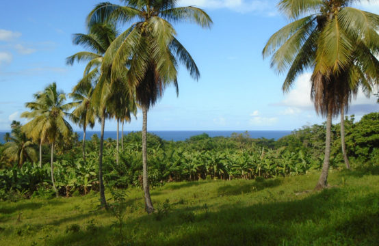 Half Acre Portion Of Land In Marigot