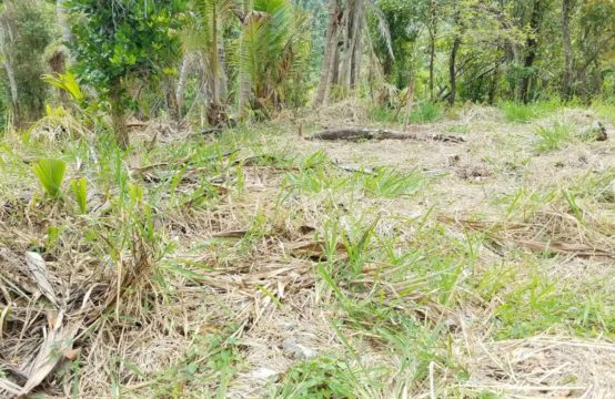 Dominica Real Estate: Land For Sale In Calibishie