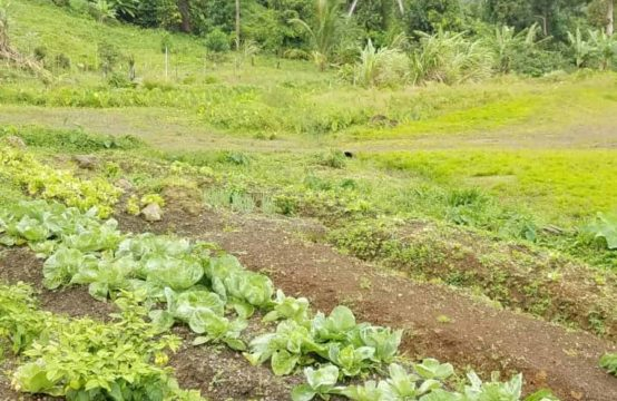 Dominica Real Estate: Land For Sale In Riversdale Estate
