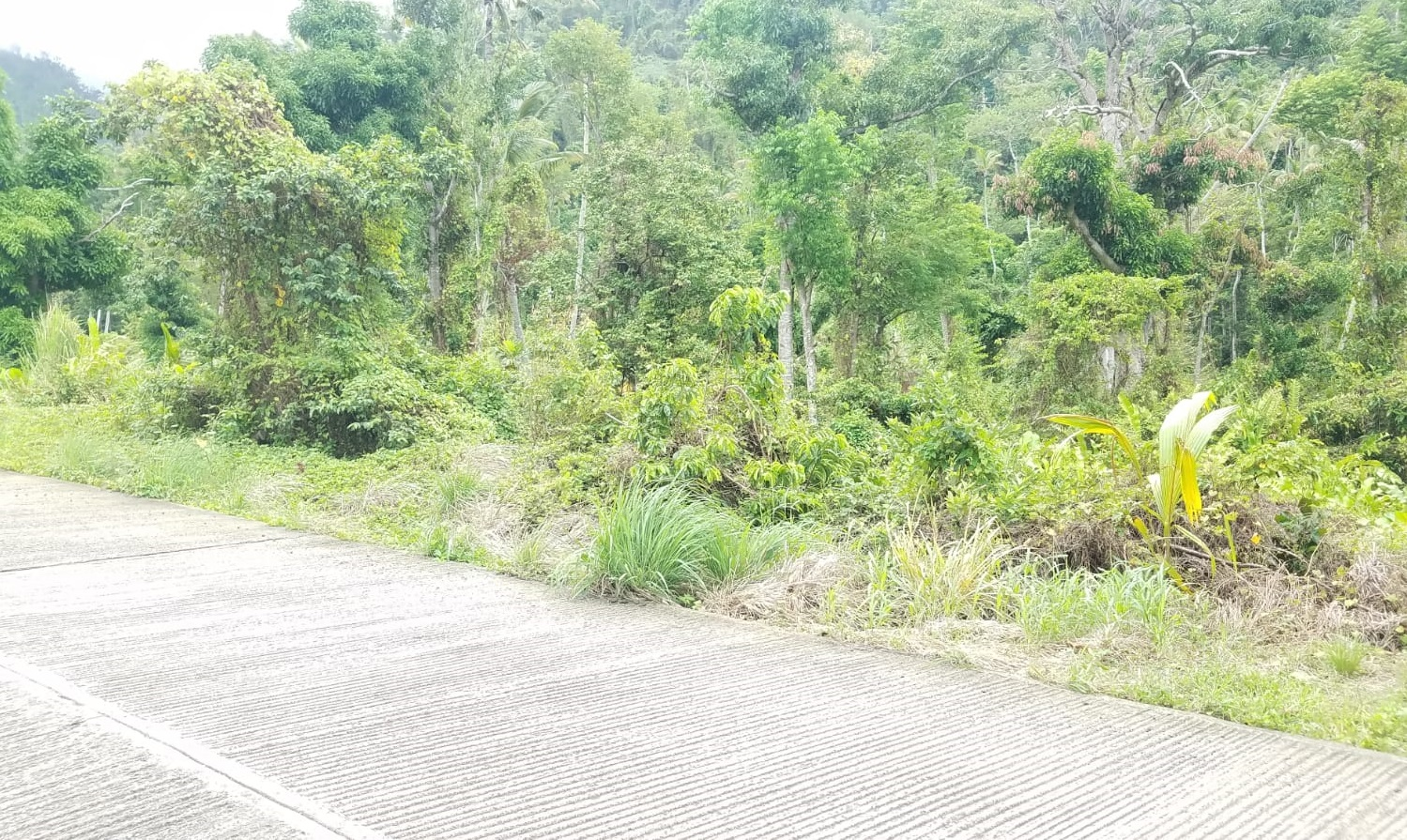 Dominica Real Estate: Land For Sale In Guillet