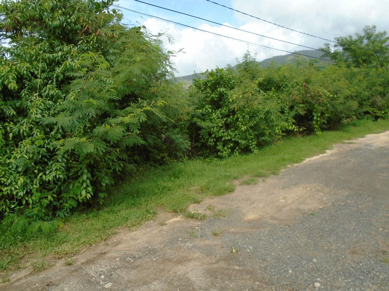 Dominica Real Estate: Land For Sale In Morne Daniel