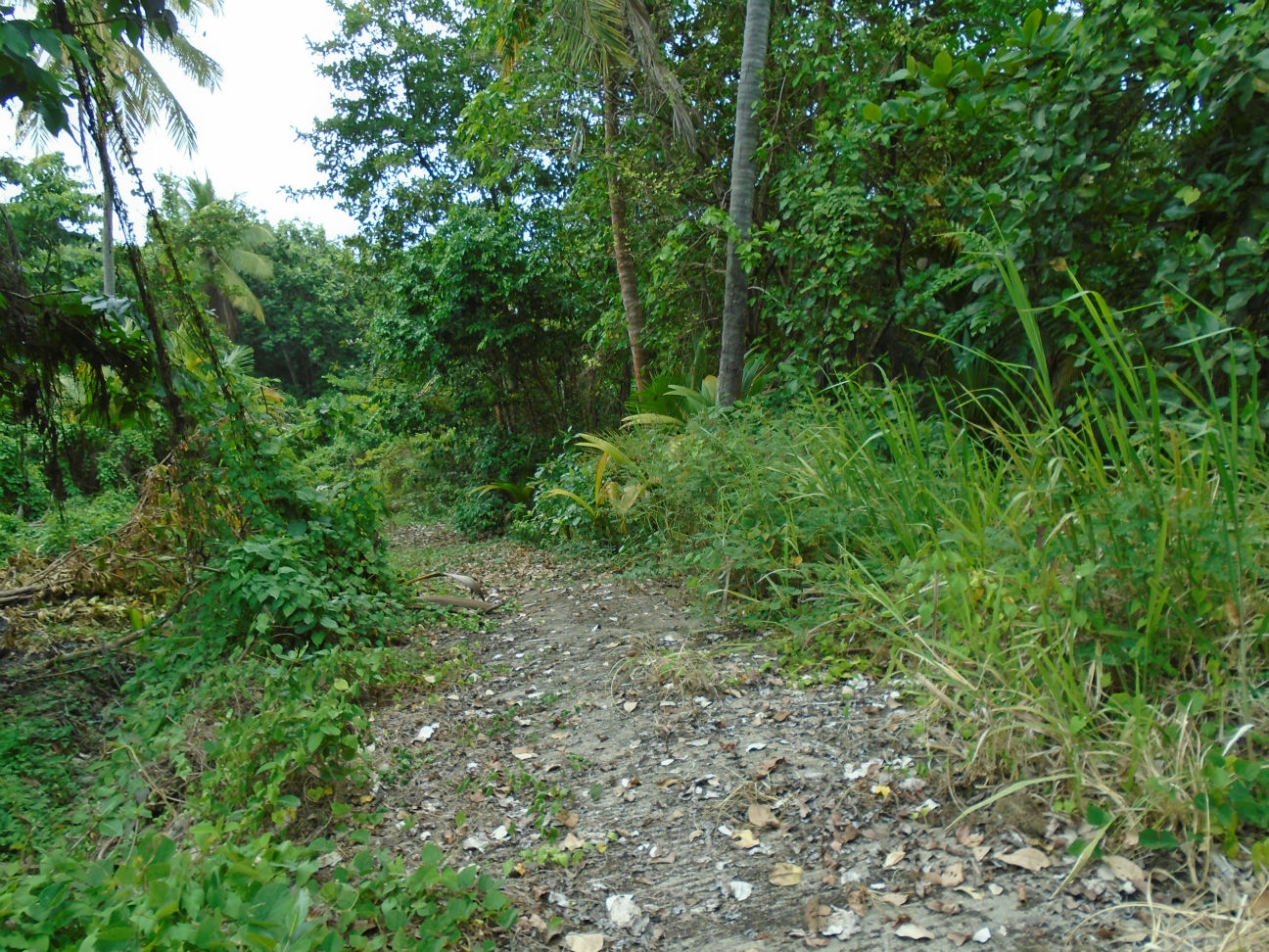 Dominica Real Estate: Land For Sale at North-End, Marigot