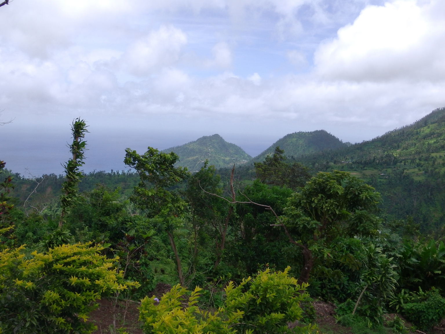 Dominica Real Estate: Property For Sale In Bellevue Chopin
