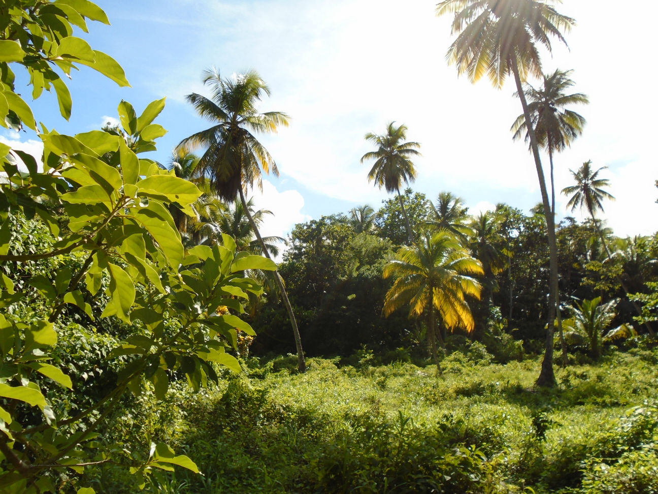 Dominica Real Estate: Land For Sale In WoodfordHill