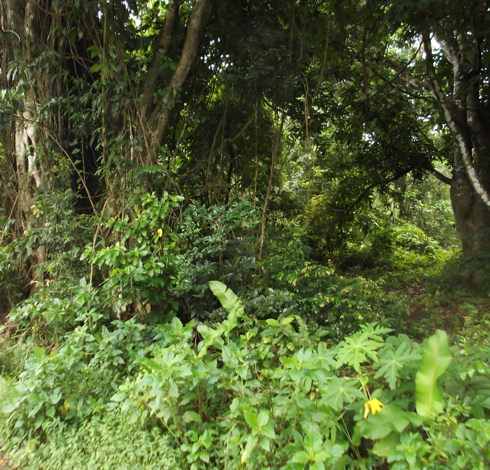 Dominica Real Estate: Acres of land for sale in Picard
