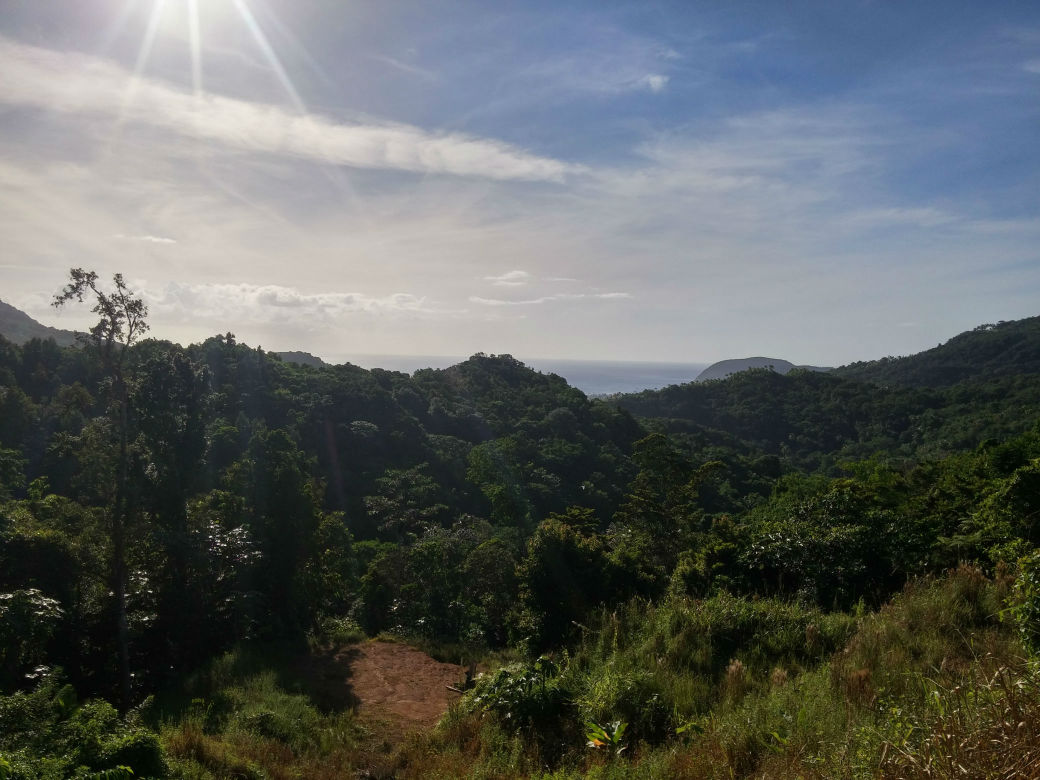 Dominica Real Estate: Acres of land in Bourne for sale