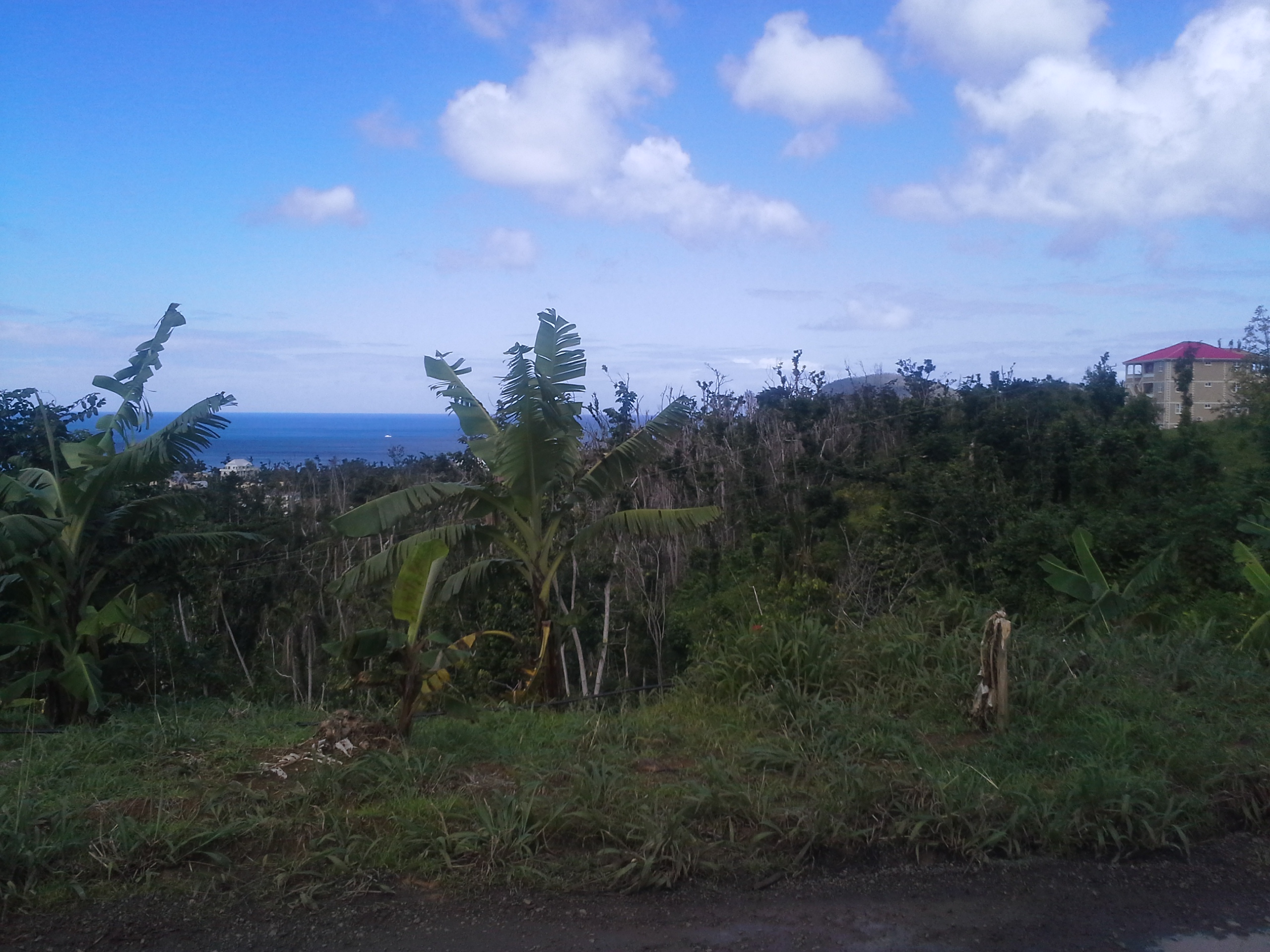 Dominica Real Estate: Prime Lot For Sale In Portsmouth