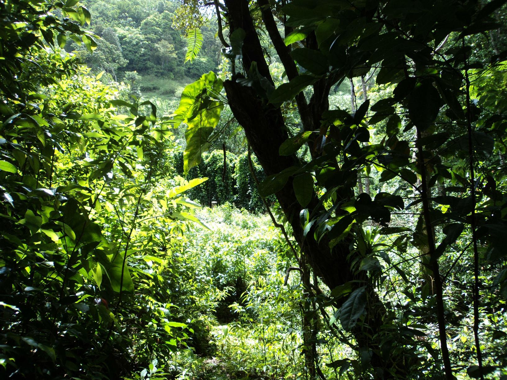 Dominica Real Estate: Land For Sale In Despor