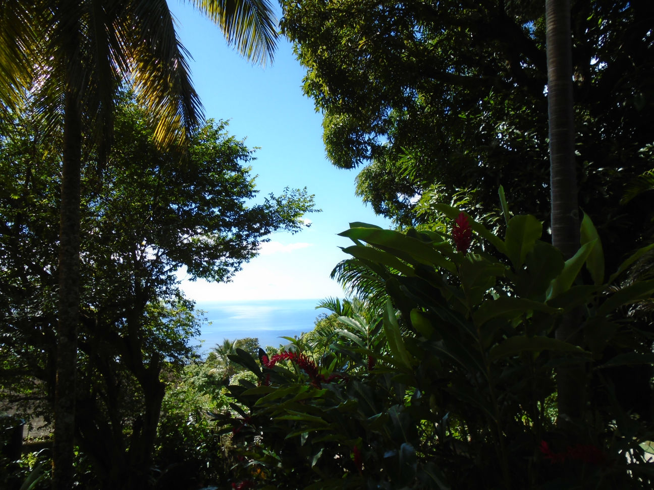 Dominica Real Estate: Land For Sale At Gommier