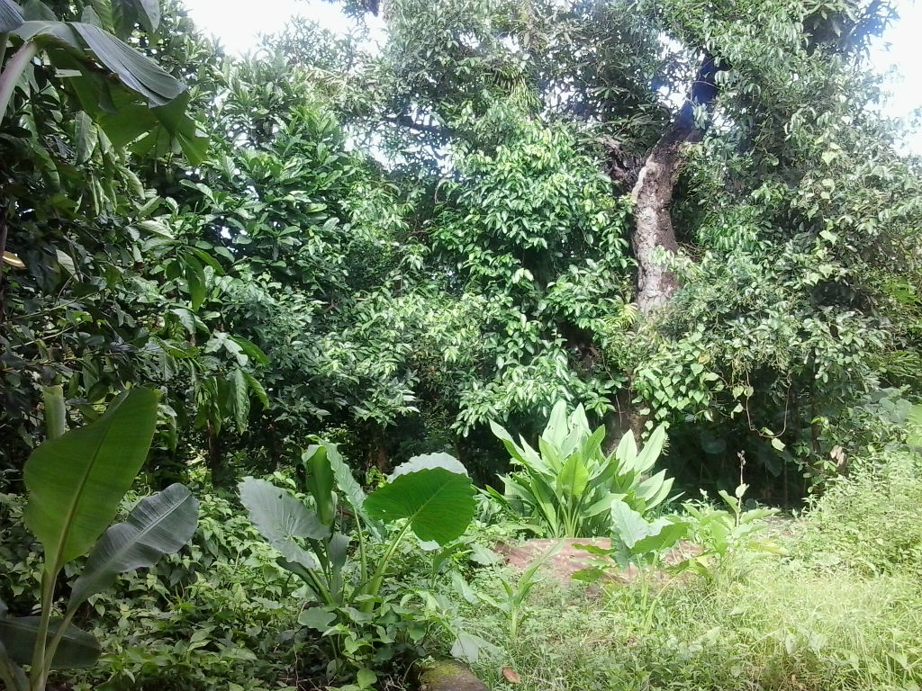 Dominica Real Estate: Residential Lot For Sale