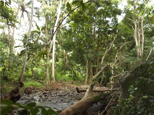 Dominica Real Estate: Land For Sale In Batalie
