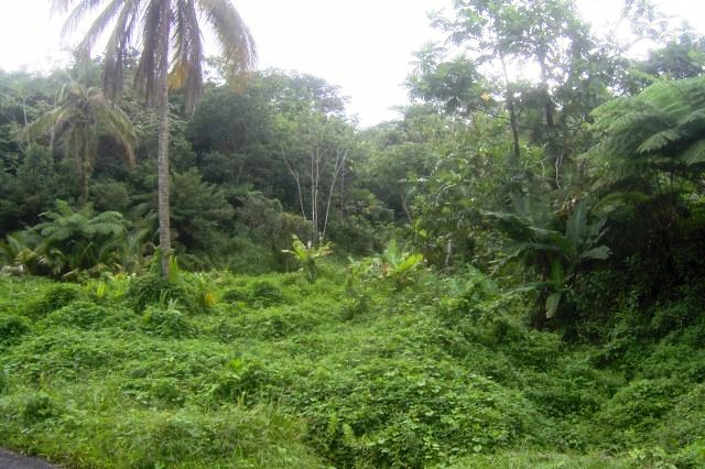 Dominica Real Estate: Rain Forest Land For Sale