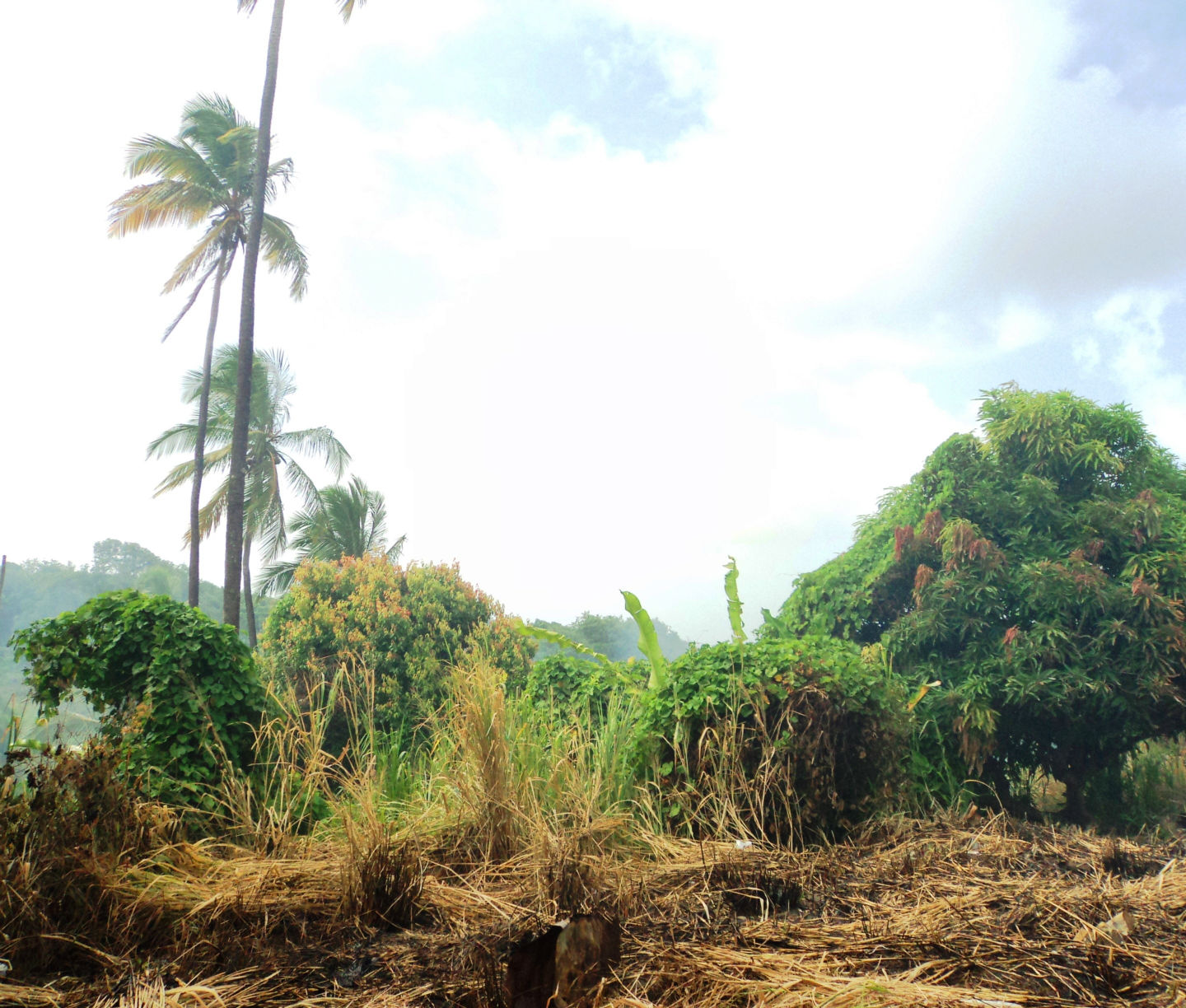 Dominica Real Estate: land For Sale In Woodford Hill