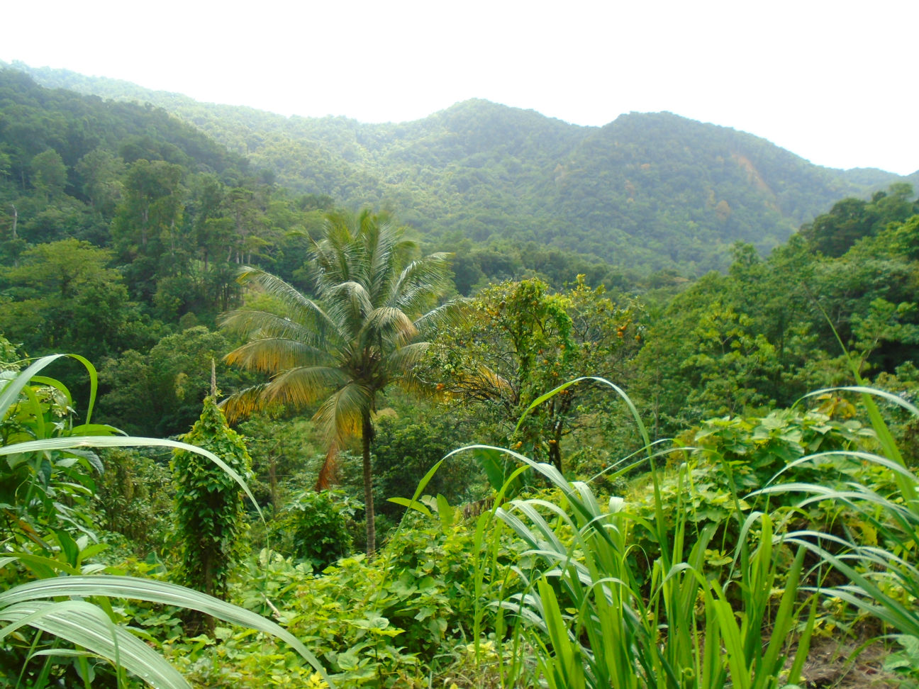 Dominica Real Estate: Property for sale in syndicate