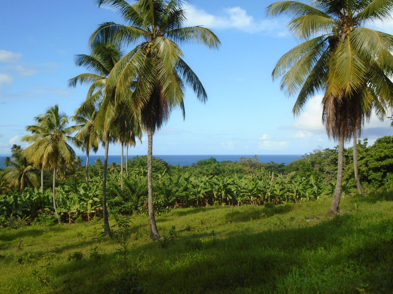 Dominica Real Estate: Half Acre Portion Of Land In Marigot