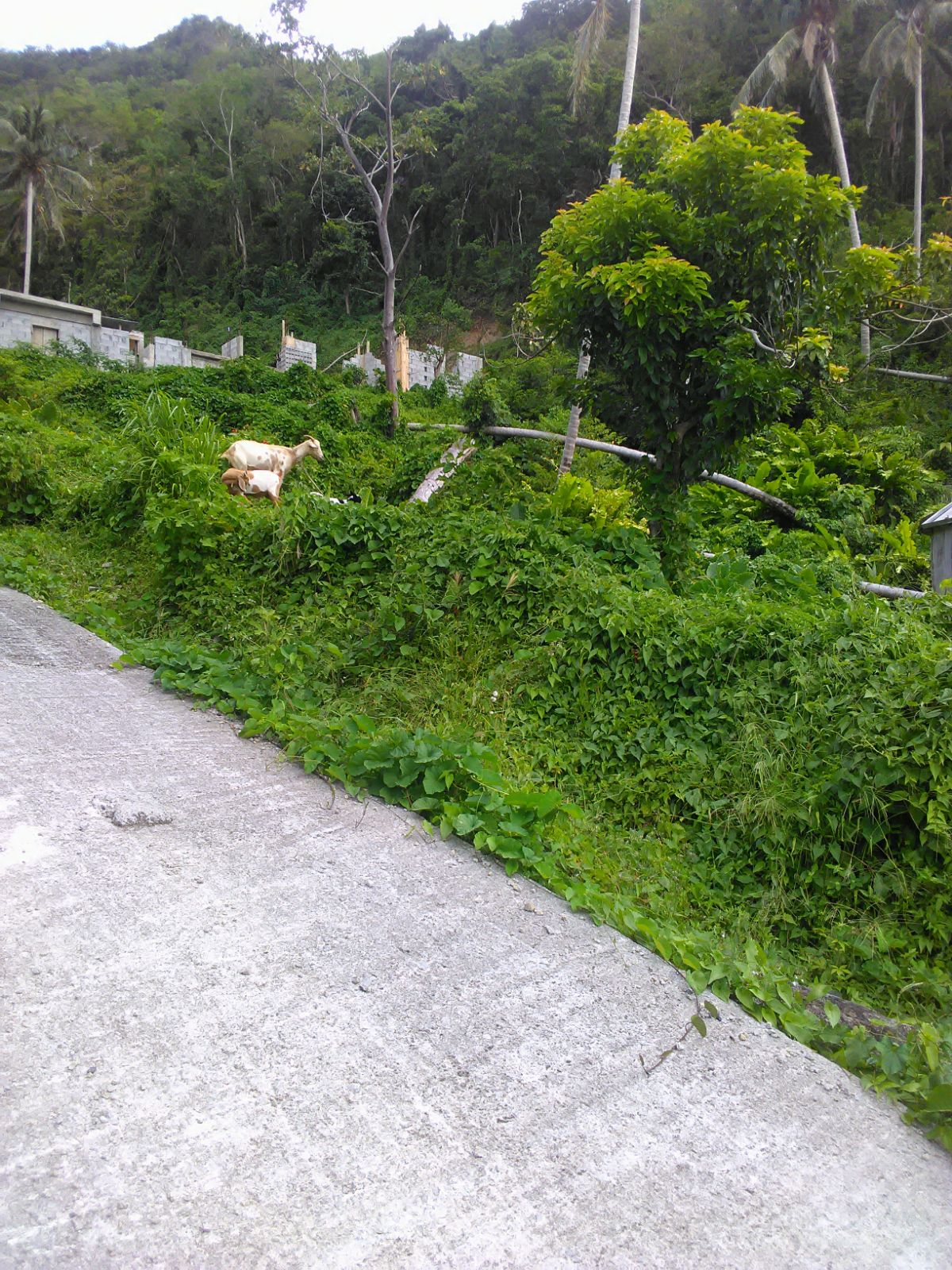 Dominica Real Estate: Lot For Sale In Loubiere